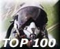 Aviation Top 100 Site